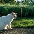 Photos: 光る猫