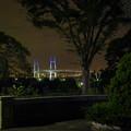 夜の横浜ベイブリッジ