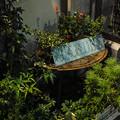 写真: 雨の日の花屋