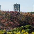 Photos: 根岸競馬場跡遠景@根岸森林公園側から