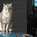 ご近所猫の日光浴1