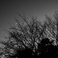 Crescent, Silhouette & Twilight