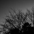 Crescent, Silhouette & Twilight