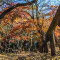 Photos: 落葉の道