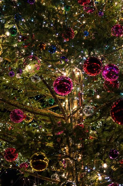 Photos: クリスマスツリーのオーナメント1@横浜赤レンガ倉庫2012