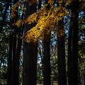 Photos: 林の中で見つけたスポットライト