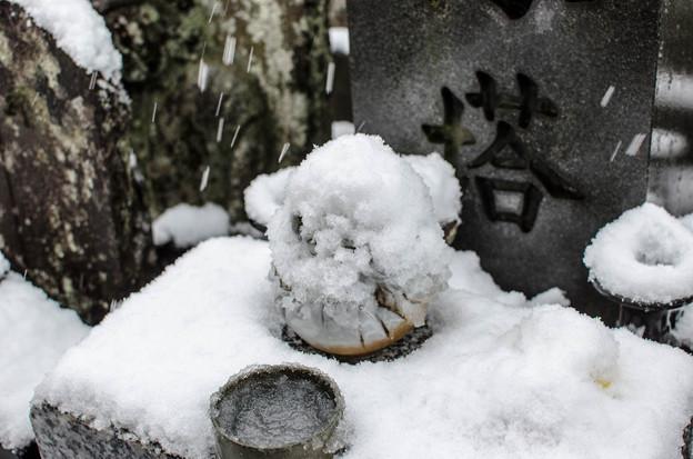 Photos: 龍谷寺のダルマ@只管打坐