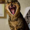Photos: がおぅ!俺は百獣の王だ!