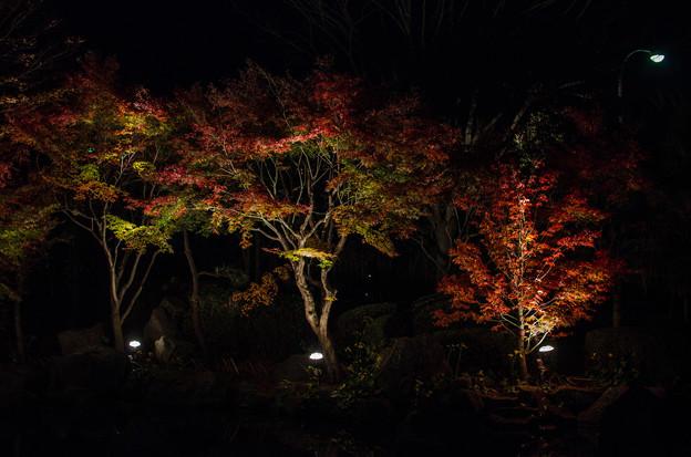 Photos: 大磯紅葉ライトアップ2012@NIKON-D5100-1