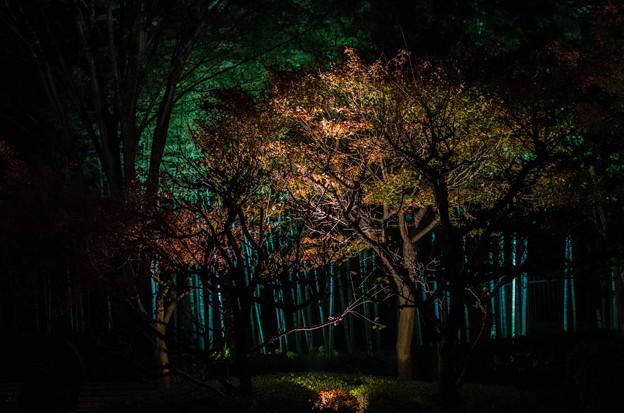 大磯紅葉ライトアップ2012@NIKON-D5100-2