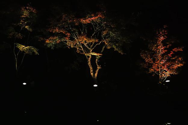 大磯紅葉ライトアップ2012@SIGMA-DP2Merrill-2