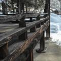 Photos: 風雪に耐えるとは、こういうのか、、