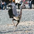 Photos: 天性のダンサーみたいな舞い