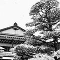 雪の東京、八王子の両輪山龍谷寺