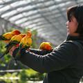 掛川花鳥園は良いとこ、一度はおいで