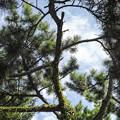 枝が形作っている姿が、、