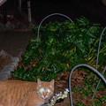 Photos: 猫バスか?(爆)