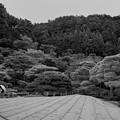 銀閣寺の庭