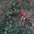赤い鏃(やじり)