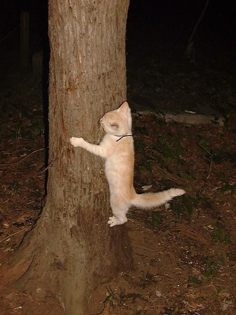 きゃらちん、初めての木登り