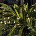 Photos: 雀がなってる樹