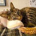 ウサギ耳(爆)の猫