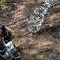 Photos: 春の道