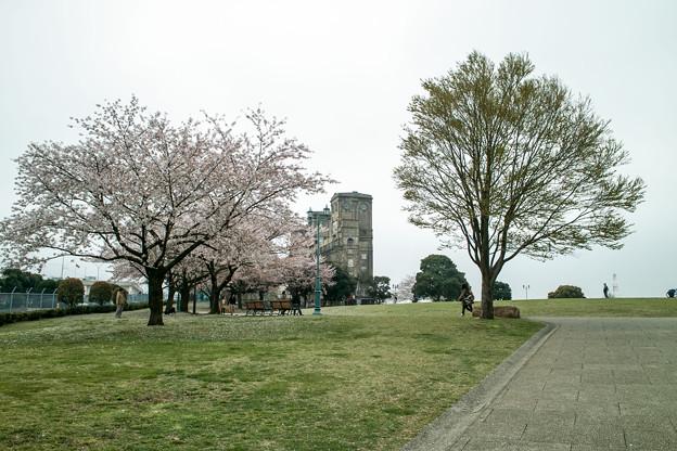 Photos: 桜のある根岸競馬場跡1@SIGMA-DP1s