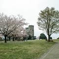 桜のある根岸競馬場跡1@SIGMA-DP1s