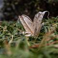 Photos: 枯葉も傷つくことなく落下