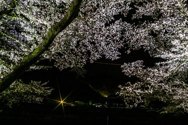 夜桜撮ってみた