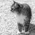 お寺の守護猫