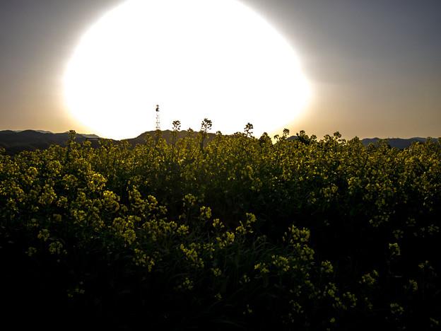 太陽大爆発(爆)