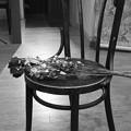 a dried flower-2