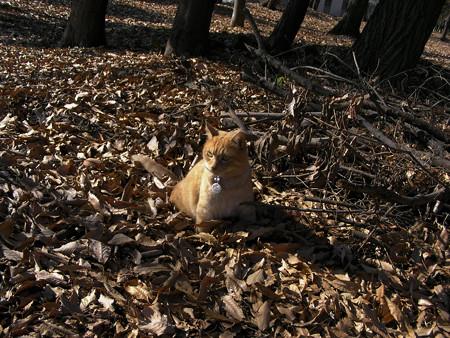ふかふかの木の葉は好き