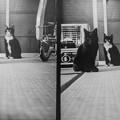 昭和の風情の猫、石油ストーブ、畳、そしてモノクロ