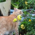 花を愛でてみる