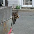Photos: 無理矢理「左手挙げの招き猫」