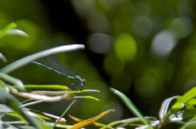 Photos: 緑の国の支配者
