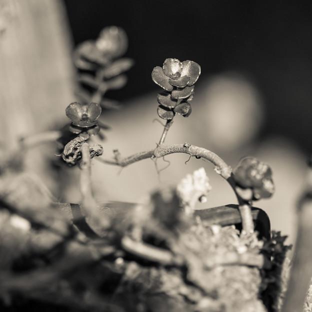 鉄で出来た花の様になった(爆)