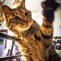 左手挙げ招き猫への道1