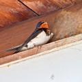 Photos: 春の鳥といえば