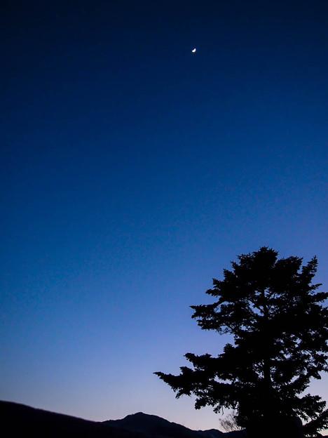 Photos: 月に祈る樹