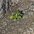 根性植物は今日も陽光に映える