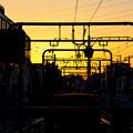 Photos: 夕陽のシルエット
