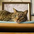 Photos: へたれ猫