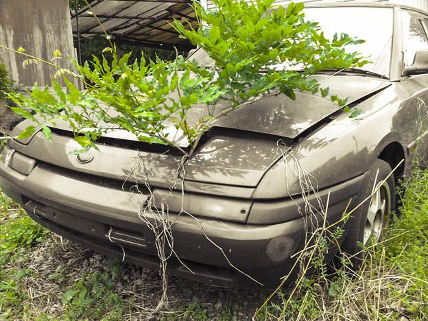 Photos: 根性植物@Scrap Car2