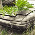 根性植物@Scrap Car2