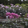 花の命は短くて、、