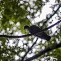 Photos: 玉暈けも度を超すと、樹の枝まで蛙の卵みたいになるんですね(爆)